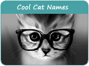 Cool Cat Names