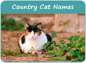 Country Cat Names