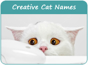 Creative Cat Names
