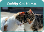 Cuddly Cat Names