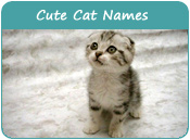 Cute Cat Names