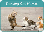 Dancing Cat Names