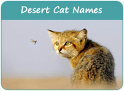 Desert Cat Names