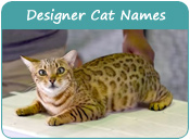 Designer Cat Names