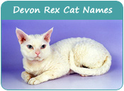 Devon Rex Cat Names