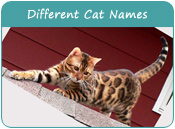 Different Cat Names