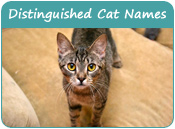 Distinguished Cat Names