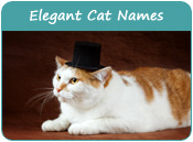 Elegant Cat Names