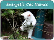 Energetic Cat Names