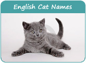 English Cat Names