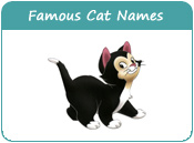 Famous Cat Names, Names from Famous Cats, Page 1