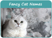 Fancy Cat Names