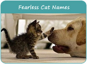 Fearless Cat Names