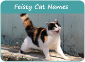 Feisty Cat Names