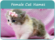 Female Cat Names