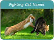 Fighting Cat Names
