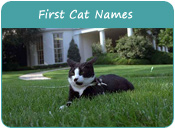 First Cat Names