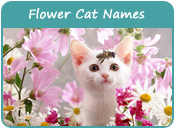 Flower Cat Names