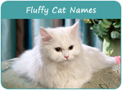 Fluffy Cat Names