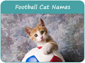 American Football Cat Names