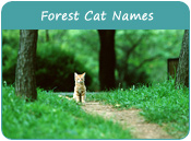 Forest Cat Names