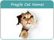 Fragile Cat Names