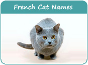 French Cat Names