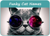 Funky Cat Names