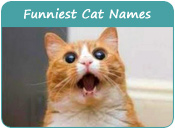 Funniest Cat Names