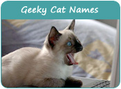Geeky Cat Names