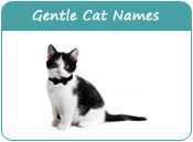 Gentle Cat Names