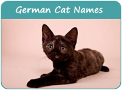German Cat Names