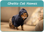 Ghetto Cat Names