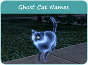 Ghost Cat Names