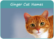 Ginger Cat Names