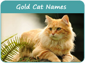 Gold Cat Names