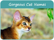 Gorgeous Cat Names