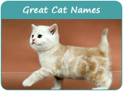 Great Cat Names