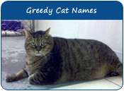 Greedy Cat Names