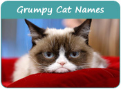 Grumpy Cat Names