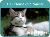 Handsome Cat Names