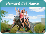 Harvard Cat Names