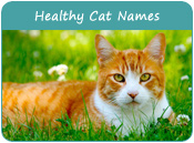 Healthy Cat Names