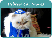 Hebrew Cat Names