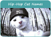 Hip-Hop Cat Names