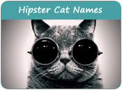 Hipster Cat Names