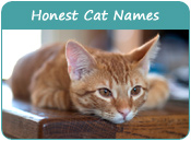 Honest Cat Names