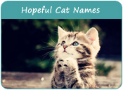 Hopeful Cat Names