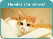 Humble Cat Names