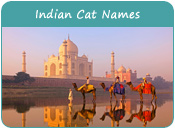 Indian Cat Names